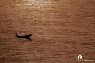 Plywood - Mayur