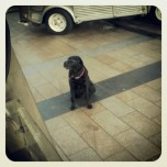 One of our best customers spent about 2 hours outside the van this week.